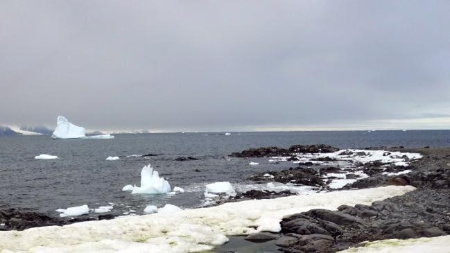 El cambio climático hace que la Antártida se ponga verde como la nieve