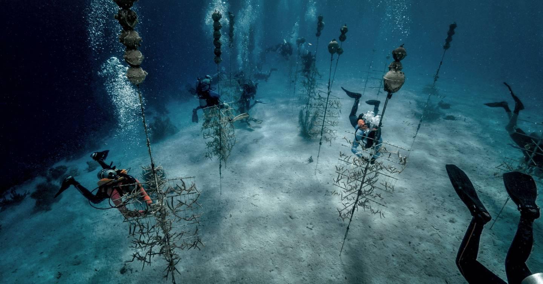 Esta granja de coral de los fondos marinos está tratando de salvar nuestros arrecifes de la extinción