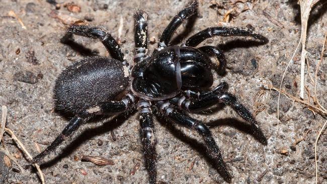 Los científicos inventan Shazam para arañas y serpientes
