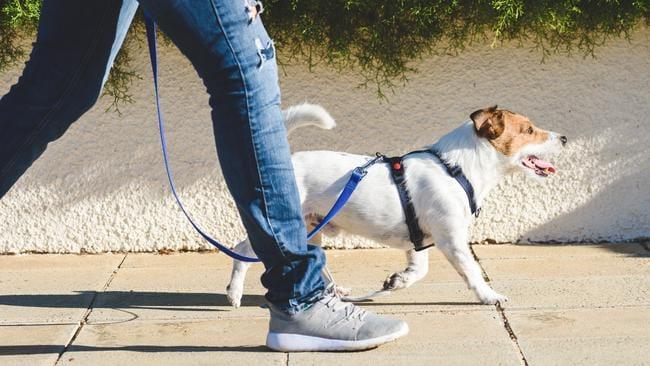 El ministro alemán redacta una nueva ley para que los dueños paseen perros dos veces al día