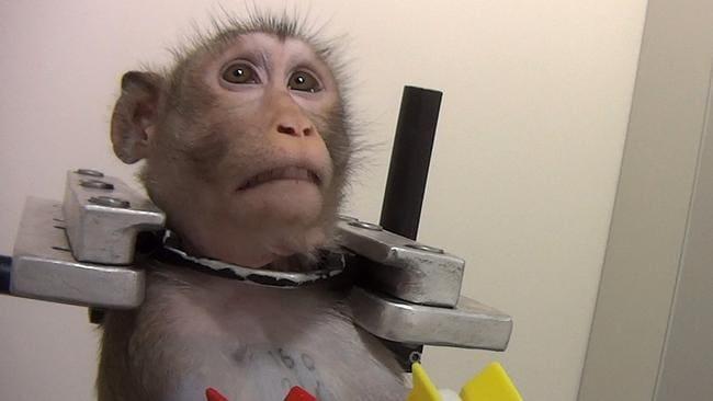 La instalación alemana de experimentación con animales puede permanecer abierta I Fotos