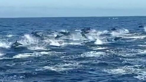 Estampida de delfines capturados en barco de avistamiento de ballenas en California