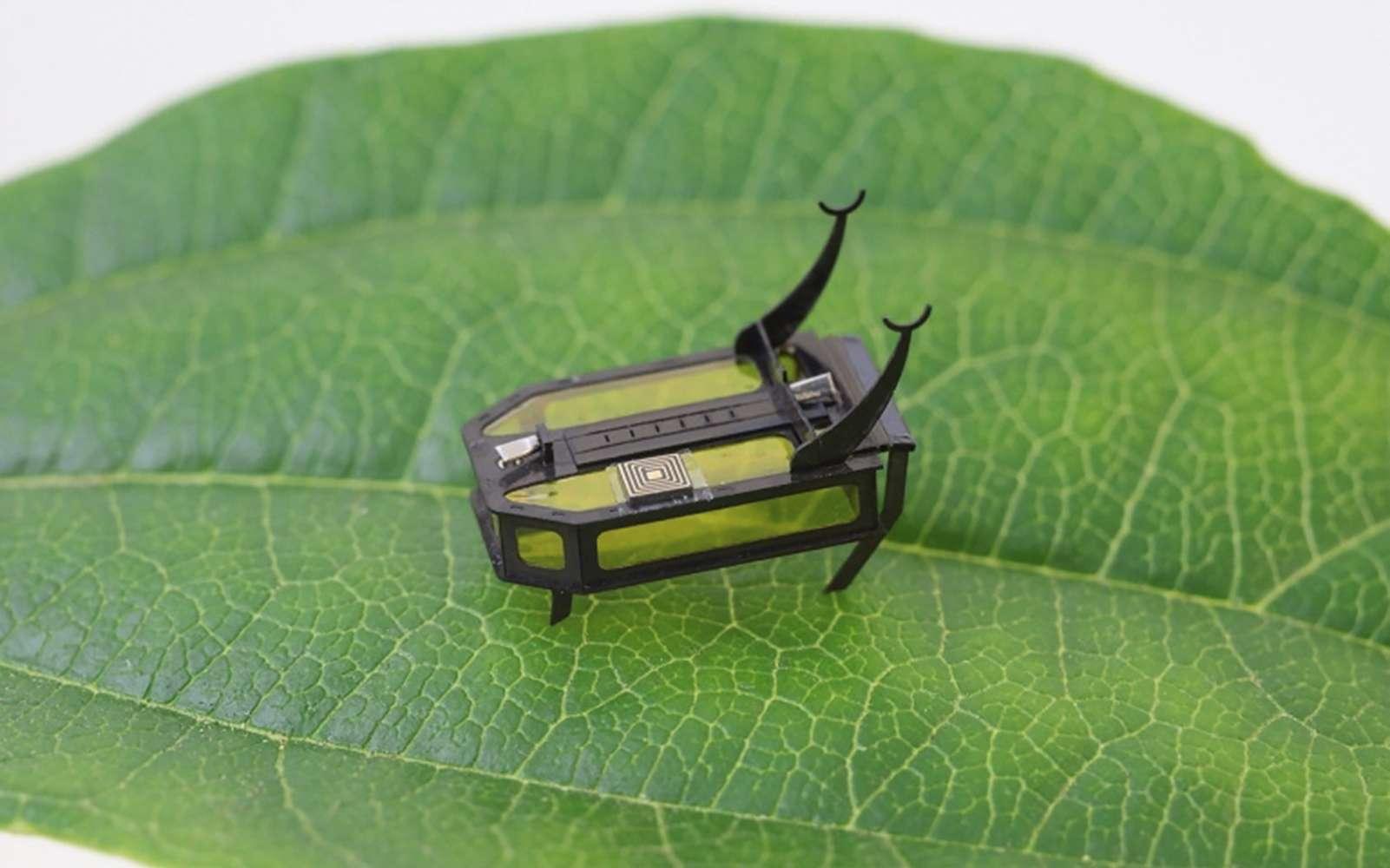Ce mini-robot scarabée avance, rampe, grimpe et peut porter des charges. © Xiufeng Yang, University of Southern California, AFP