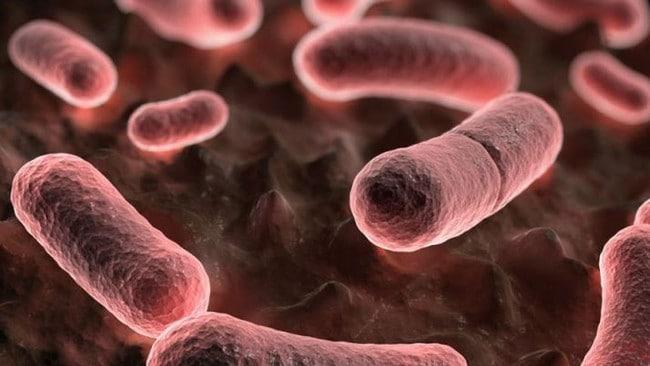 California informa el primer caso de peste bubónica en cinco años