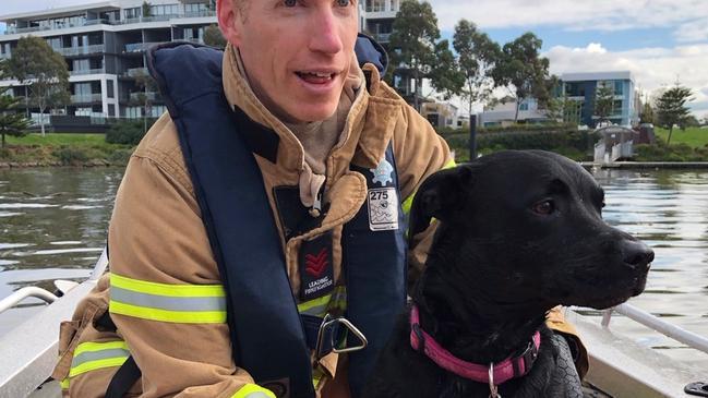 Los bomberos rescatan a un perro descarado que nadaba a 1 km de su dueño