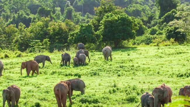 Cazador furtivo de elefantes condenado a 30 años en prisión en el Congo