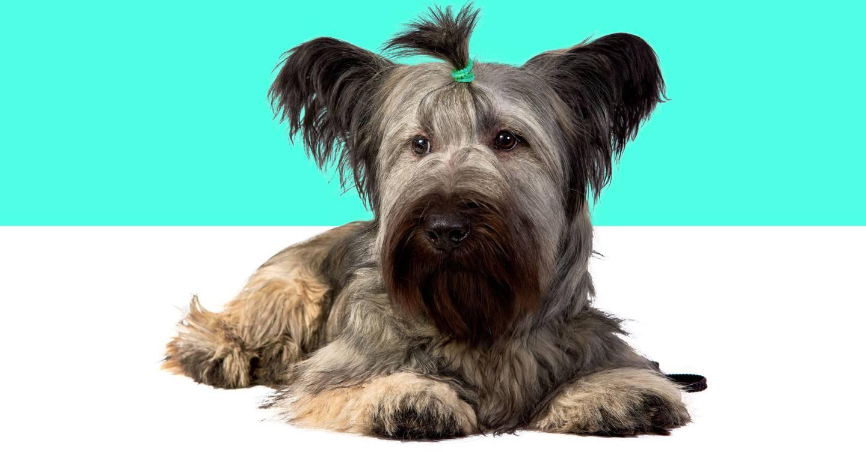 Los bancos de ADN para perros podrían evitar la extinción de las razas más raras del Reino Unido