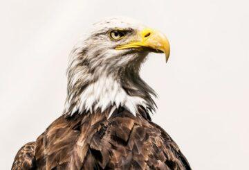 Los científicos finalmente identifican una toxina mortal que ha estado matando pájaros