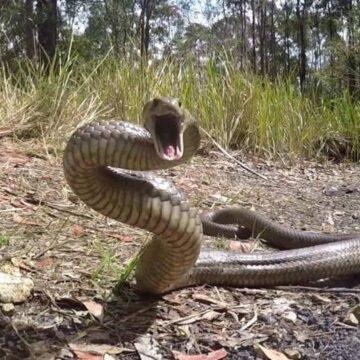 Serpientes en movimiento en busca de terrenos más altos