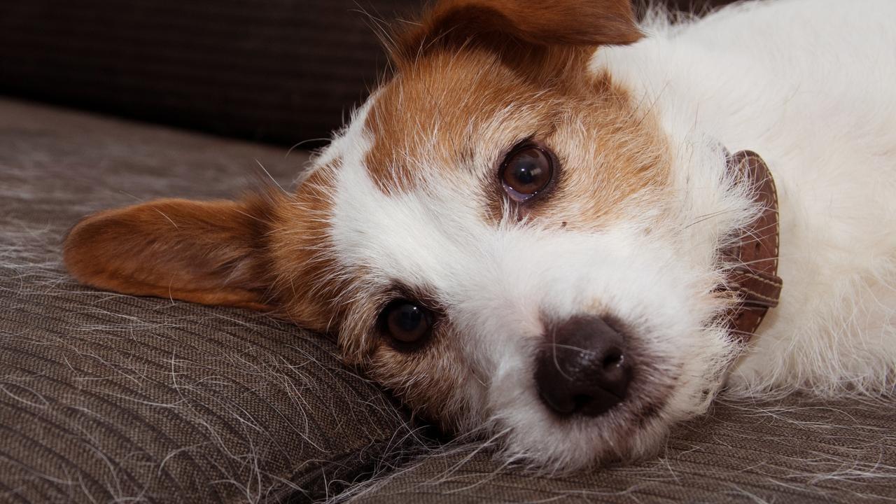 Veterinario de Florida acusado de abusar sexualmente de un perro