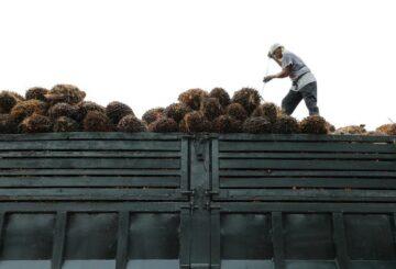 Frente a la presión pública, las empresas de aceite de palma se están volviendo ecológicas: estudio