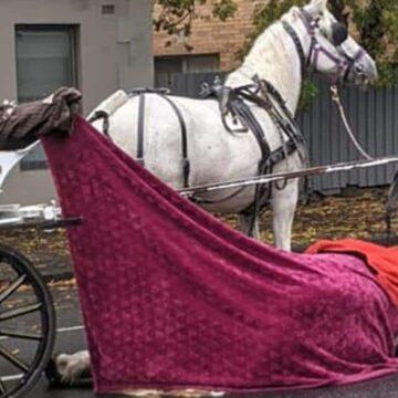 Fotos muestran caballo de carro muerto en Arden Street en el norte de Melbourne