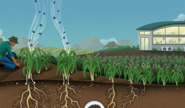 El suelo sobrealimentado podría extraer carbono del aire