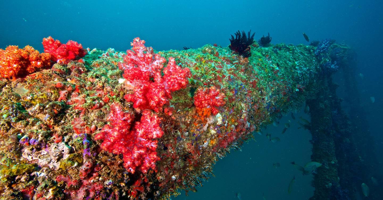 Cómo las plataformas petrolíferas pueden salvar los arrecifes de coral