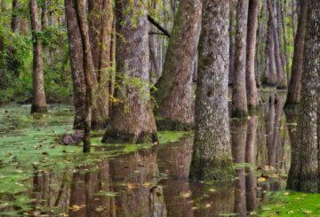 Microbios hambrientos en la corteza de los árboles devoran metano