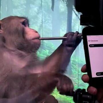 El chip cerebral de Elon Musk ve a un mono jugar Pong con su mente