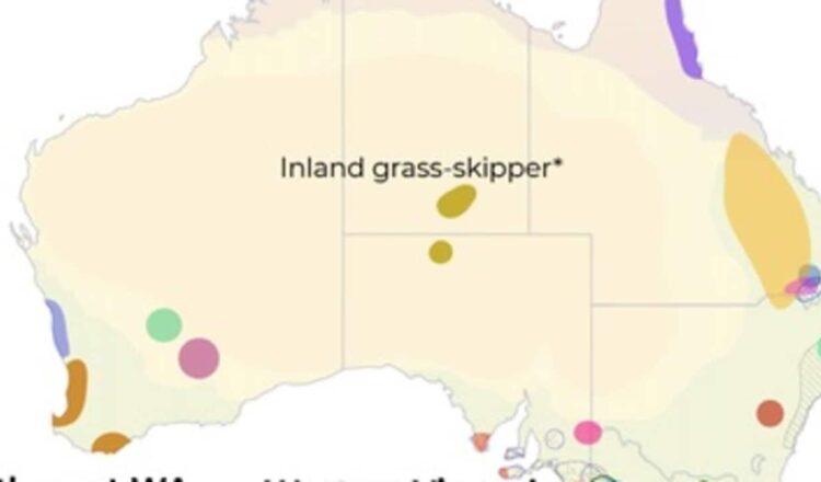 Decenas de especies de mariposas australianas en peligro de extinción