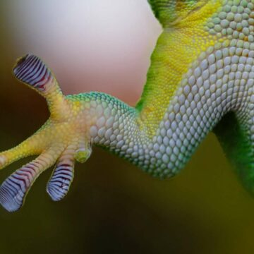Le biomimétisme est l'un des moteurs de la robotique. © Rudy et Peter Skitterians/Pixabay