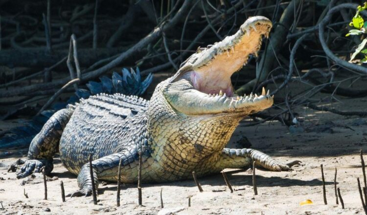 Ataque de cocodrilo en el Parque Nacional Kakadu, hombre de Wollongong herido