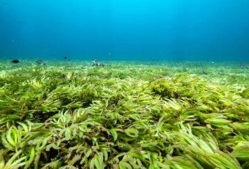 El uso ilegal de redes de deriva se generaliza en el Océano Índico, dice Greenpeace