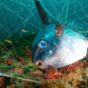 ¿Puede Seaspiracy de Netflix realmente sorprender a la gente para que no coma pescado?