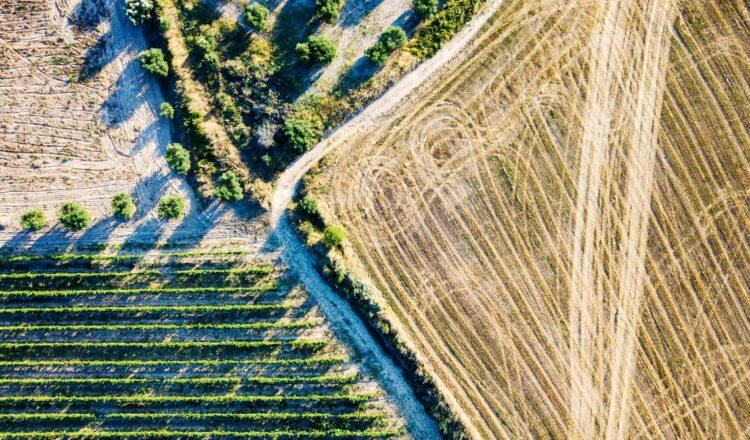 ¿Qué tan saludable es el suelo de una granja?  Compruebe qué tan activos son sus microbios