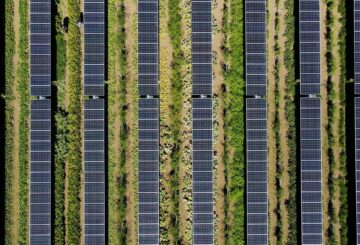 ¿Cultivar cultivos bajo paneles solares?  Ahora hay una idea brillante
